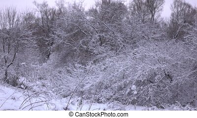 Beautiful snowy winter forest 4K pan shot - Beautiful winter...