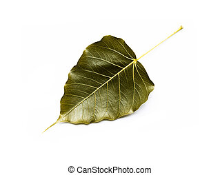 Gold Bodhi leaves on white background.