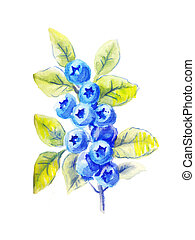 sprig of blueberries in watercolor - one sprig of...