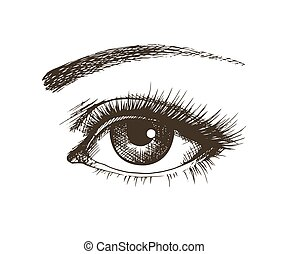 Hand-drawn beautiful female eye