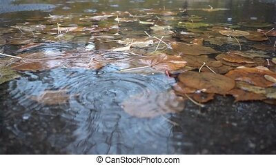 rain drops falling at the puddle with autumn leaves