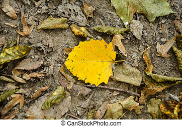 Bright yellow leaves on the ground - Bright yellow leaf on...