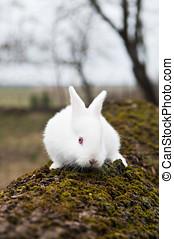 little white rabbit in a field