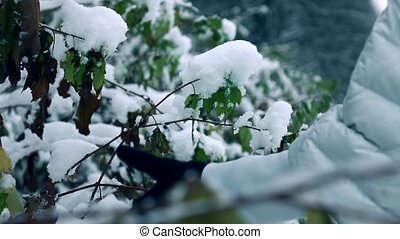 Woman hand in winter glove shaking off snow from branches in beautiful snowy forest. Slow motion shot, cold colors