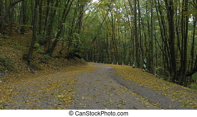 yellow leaves from trees fall from wind on an asphalt road...