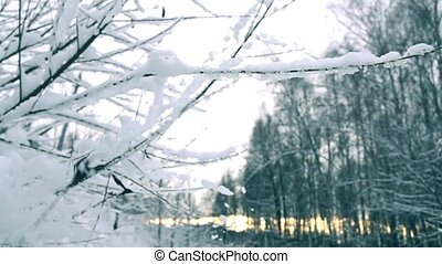 Shaking off snow from branches in beautiful snowy forest. Super slow motion shot, cold colors