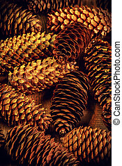 pine cone - Group of brown pine cone.