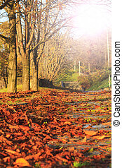 fallen leaves in a city park on  pedestrian road with sunny hotspot