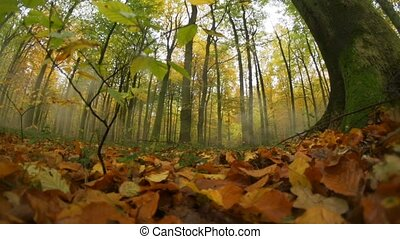 german autumn forest