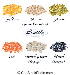 Various types of lentils. Yellow, brown, green, red, french...