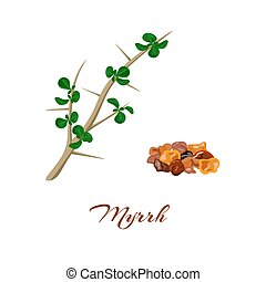 Myrrh. Commiphora myrrha. - Myrrh tree. Leaves and resin....