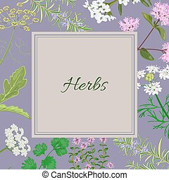 herbs square Converted - Vector card with herbs and plants....