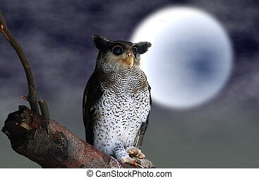 Owl sitting on tree branch with full moon background