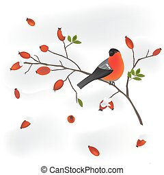 robin on a wild rose branch