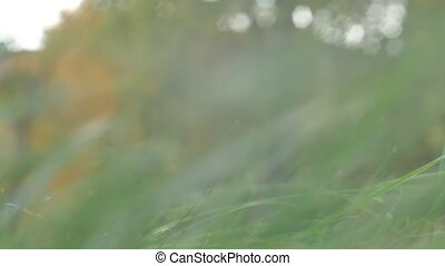 close up of grass field flowers at sunset light. colorful nature background