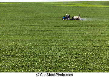 processing of cereals - agricultural field where the green...