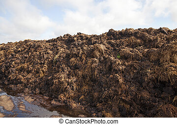 are landed in a pile of manure - are landed in an...