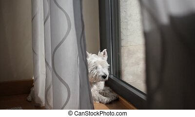 Westie basking in the sun near the balcony's door