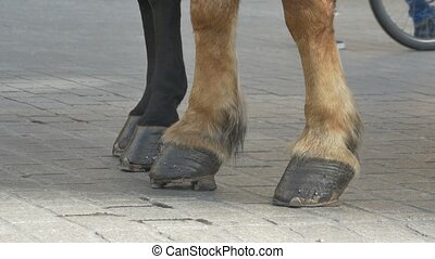 Horse Hooves on Pavement - Close-up shot of horse hooves on...