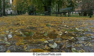 Leaves and Rain in the Park - Autumn rain on the leaves on...