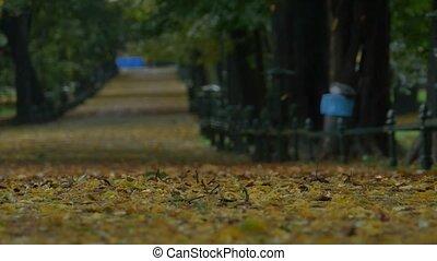 Autumn Raining Park Alley - Long shot of an autumn rainy day...