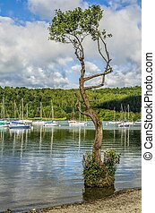 Lake Windermere at Bowness - Yachts moored on Lake...
