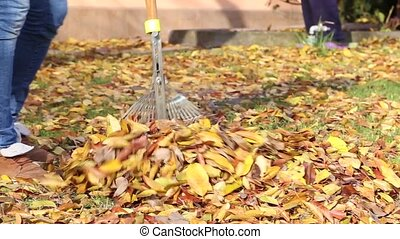 cleaning rake autumn leaves