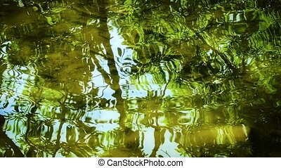 Reflection of the branches on the lake - Reflection of the...