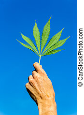 Hand holding green hemp leaf in blue sky