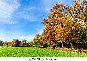 草地, 鮮艷, 天空, 樹, 秋天, 風景