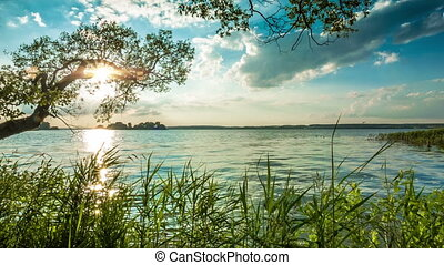 Coast of evening lake - Green bank of a lake with a tree in...
