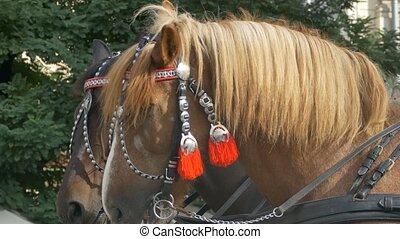 Horses with Red Harness - Portrait of beautifull horses with...