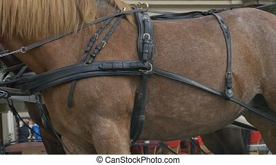 Harness on Horse - Side view of horse with the harness...