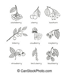 Set of garden and wild hand-drawn sketches berries - Set of...
