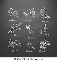 Set of garden and wild chalk hand-drawn berries - Collection...