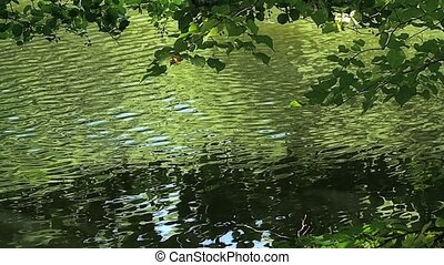Tree branches above the lake - Tree branches above the...