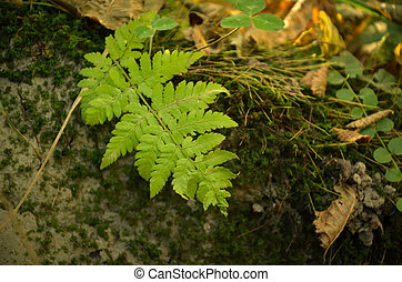 Little fern leaves exuberant and lush on moss background. -...