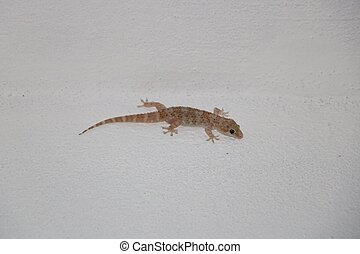 Lizard or gecko on the wall available in high-resolution and...