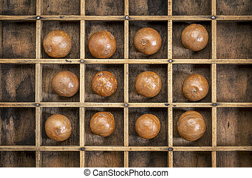 macadamia nuts abstract