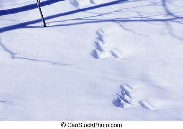 Animal tracks in snow in forest close-up
