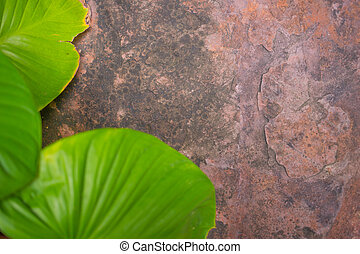 Stone background with blur foreground green leaf nature concept