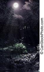 Moonlight in the woods