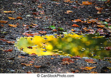 Colorful leaves and reflection in the puddle