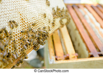 Closeup of bees on honey comb
