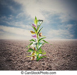 Cultivating investments - Money growing in a plant through...