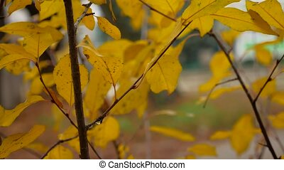 yellow leaves on the branches of trees in autumn nature landscape