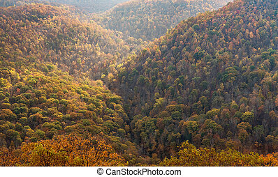 Fall colors in forest at Coopers Rock State Park WV - View...