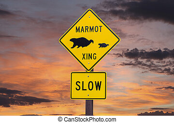 Marmot Crossing Roadsign with Sunset Sky - Marmot crossing...