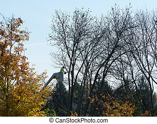 Tree surgeon cutting dead branches from tree
