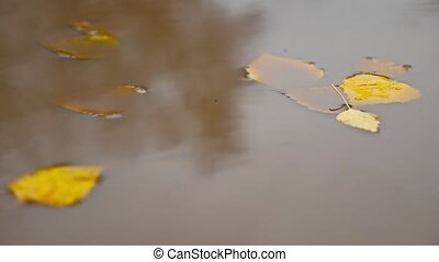 the rain in the fall in a puddle of yellow nature leaves...